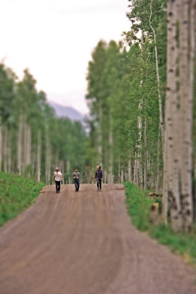 enjoying-the-vast-forest-telluraide-colorado-road-trip-2012