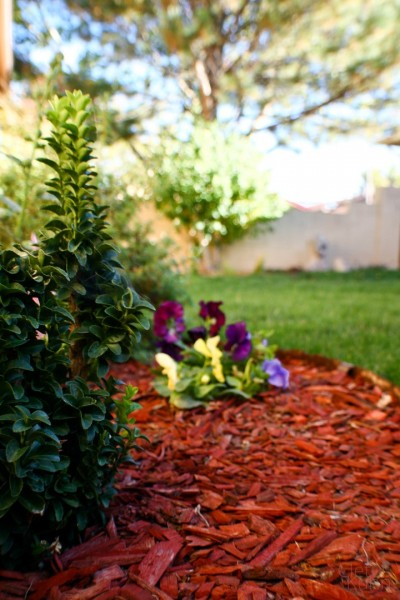 vista-verde-landscaping-albuquerque-new-mexico-1